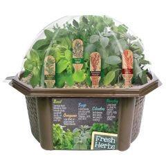 Culinary Herb Unique Garden