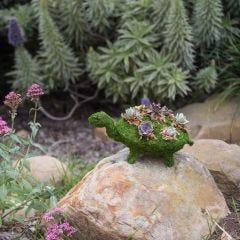 Moss Turtle Planter