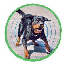 Anti-Barking Pet Trainer