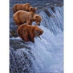 Weatherproof Canvas Art - Nice Catch