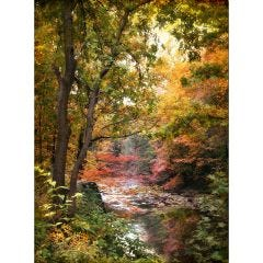 Weatherproof Canvas Art - Silent Stream